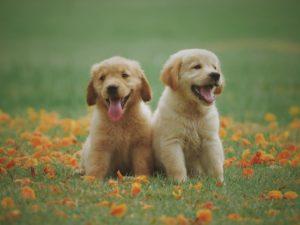 Herplaatsing honden